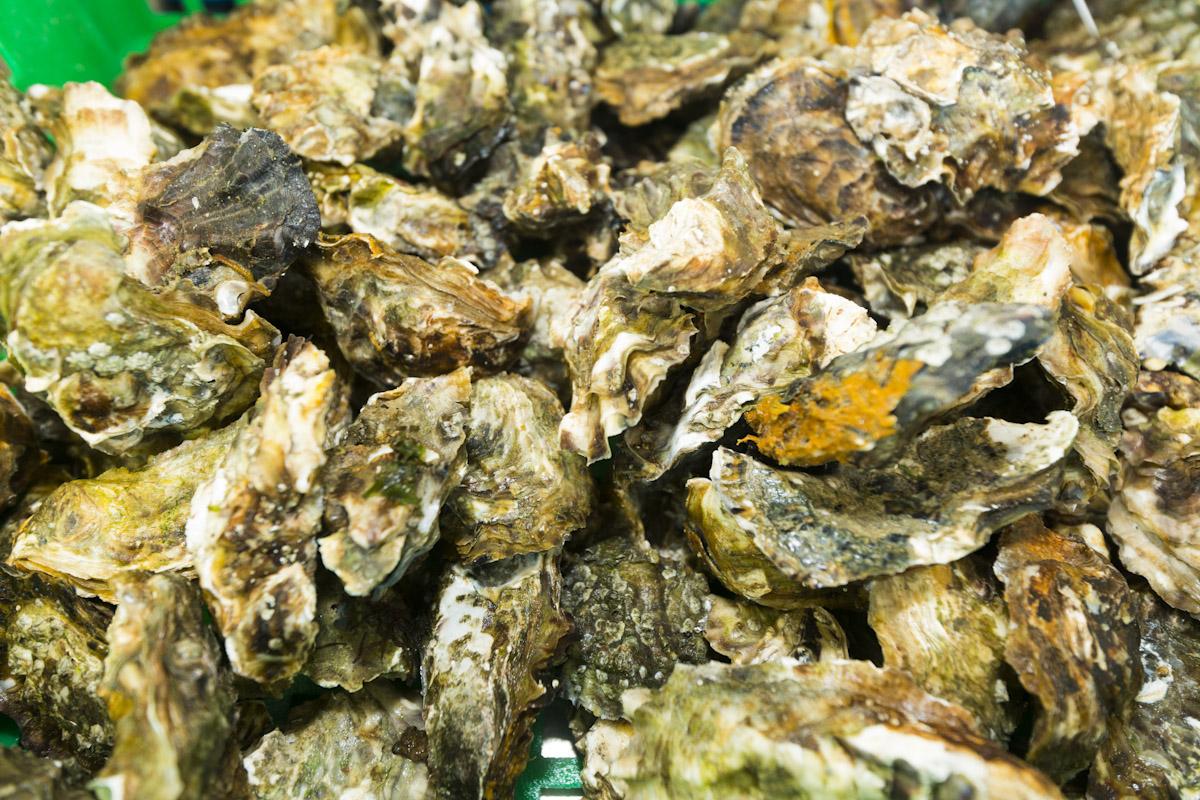Huîtres au port de la Guittiere à Talmont-Saint-Hilaire - Crédit Photo ©Joncheray Valery
