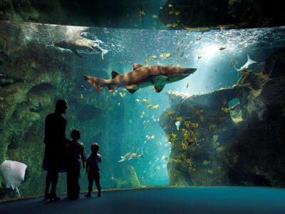Amphithéâtre des Requins - Aquarium de la Rochelle - Crédit Photos : ©Aquarium de la Rochelle
