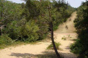 Forêt domaniale de Longeville sur Mer crédit office de tourisme destination vendée grand littoral