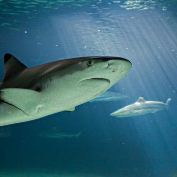 Aquarium de Vendée à Talmont-Saint-Hilaire