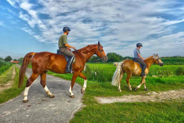 Balade à cheval dans la campagne