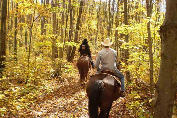 Balade à cheval dans la forêt