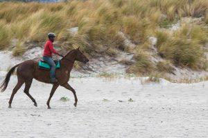 Balade à cheval - Destination Vendée Grand Littoral