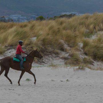 Balade équestre cheval sur la plage