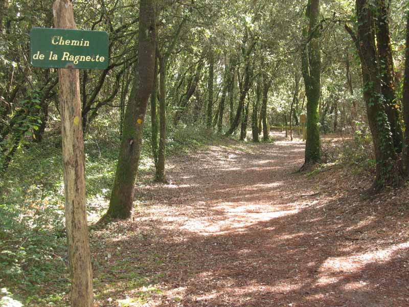 Forêt balades Saint-Vincent-sur-Jard