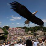Puy du Fou - Les oiseaux