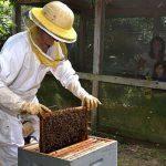 Fête des ruches Poiroux La Folie de Finfarine
