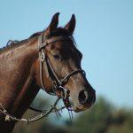 Randonnée équestre cheval