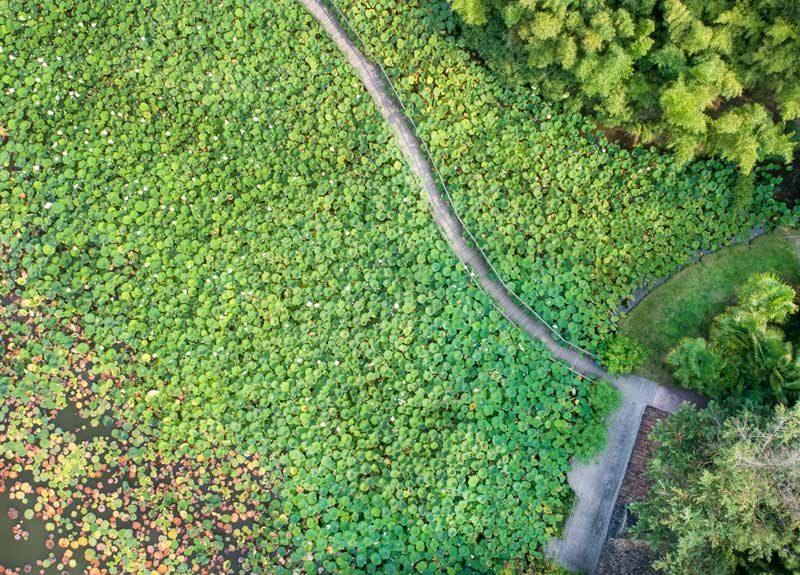 Parc floral de la Court d'Aron - crédit : Horizon Vertical