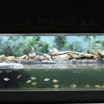 Mangrove aquarium Destination Vendée Grand Littoral