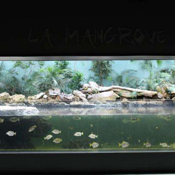 Mangrove aquarium Destination Vendée Grand Littoral
