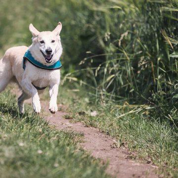 Balade avec chien en vendée grand littoral