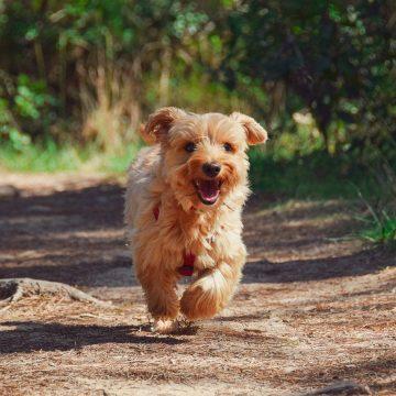 balade en forêt avec chien en vendée grand littoral
