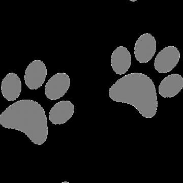 Pattes de chien en Vendée