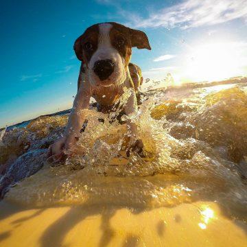 Plages accessibles aux chiens en Vendée