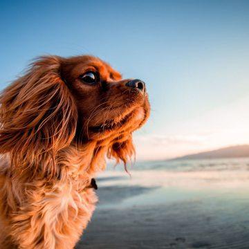 Plages accessibles aux chiens en Vendée Grand Littoral