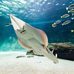 Aquarium de Vendée à Talmont Saint Hilaire