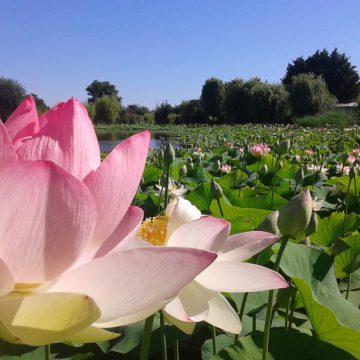 Parc Floral la Court d'Aron